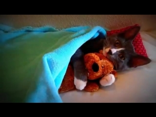 Кошачий Youtube - Кот обнимает плюшевого мишку!