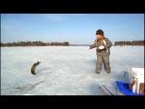 Отважная рыбачка победила злую щуку.