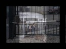 Cổng tự động, cửa xếp inox, cửa kính tự động, thanh chắn baire