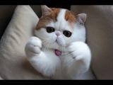 КОШКИ ТРЕБУЮТ ЛАСКИ от ХОЗЯИНА  cats want to be petted Канал ТОП 11 приколов