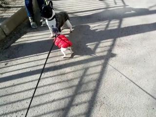 АГТ Пэйдж, прогулка