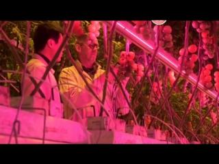 Города будущего. 3 серия. Вертикальные фермы (2016)