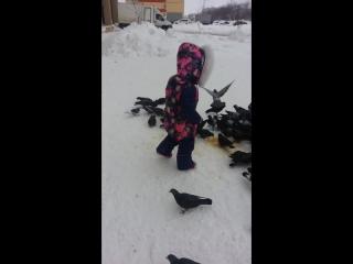 голубков кормим