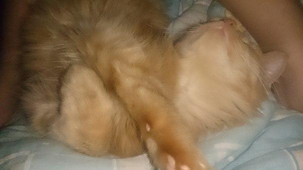 Как вылечить насморк у кошки в домашних условиях - Авто Шарм