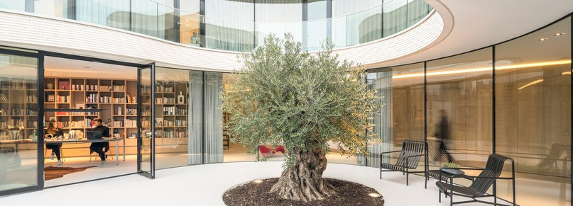 MVRDV curves casa kwantes around a single olive tree