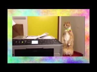 Кот испугался видео прикол. СМЕШНО ДО СЛЕЗ!!! Видео приколы про кошек 2016