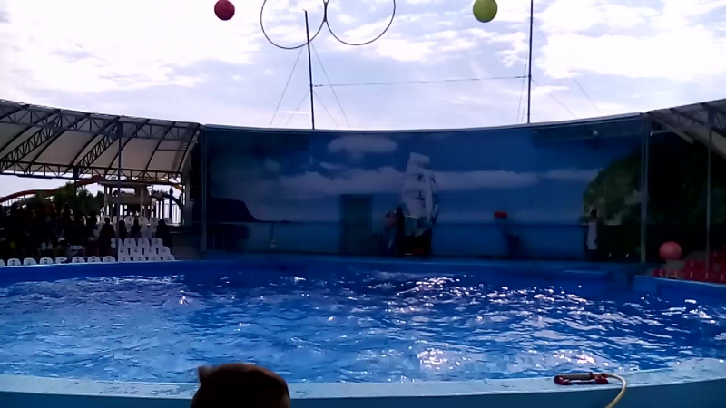 Дельфинарий Немо 1