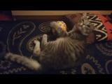 Когда кот подмигивает тебе в благодарность за новый мячик