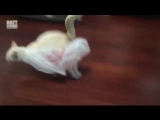 Кот пожалел, что залез в пакет