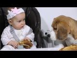 Девочка у собаки отбирает блины. Смешной ролик про бигля.