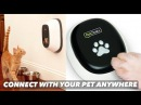 Call Your Pet for a Video Chat with Petchatz