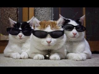 ЛУЧШИЕ ПРИКОЛЫ с котами Самые смешные видео про кошки коты Подборка лучших при ...