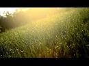 Seaeye - Autre Temps (Alcest acoustic cover)