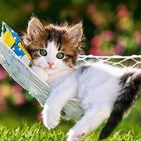 do female cats urinate to mark territory