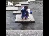 Обезьянка и собачка переходят речку