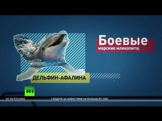 Боевые дельфины Путина и спящие ячейки в ФРГ_ RT дополнил список обвинений западных СМИ