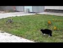 Собака и кошка бой взглядами - ВАЙ Грозный