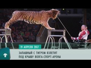Как стать успешным бизнесменом, устроить туризм по-ульяновски и увидеть тигров - 19 апреля на 1ul.ru
