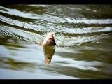 Плотва на перловку. Река Сок, Самара. Fishing rod float