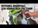 Перекись водорода для цветов Комнатные растения уход полезные советы