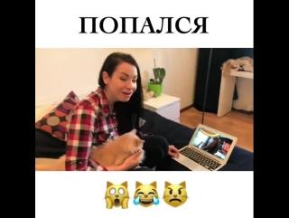 Видео о том как камеры спасли кота.