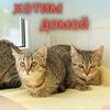 Кошки со Шпалерной . #котята_в_дар#кошки#котята_