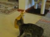 когда кот дурак