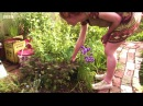 Edible Garden 3 Roots Leafy Greens - Homesteading Self-Sufficiency