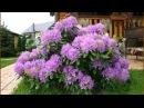 6 кустарников которые преобразят ваш сад за самое короткое время