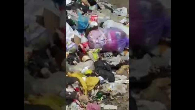 Крысы на стихийных свалках, Львов