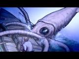 Giant Squid - Animal X