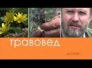 Травовед Чистотел Рассказывает Моряков Сергей Викторович