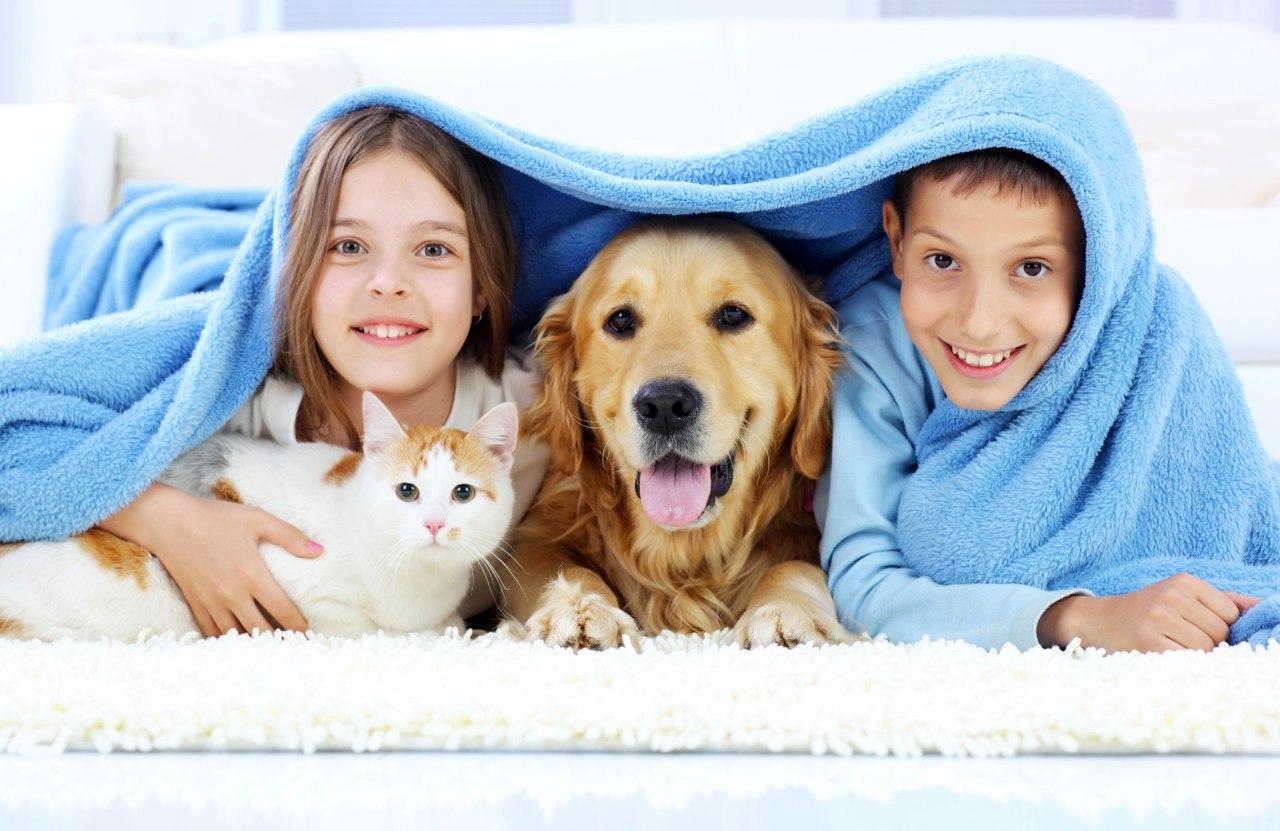 картинки с веселыми животными для всей семьи строительстве