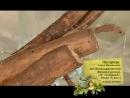 Целительница Софья Нагорняк - Лечебные свойства лапуха большого