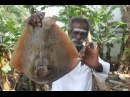 Stingray Fish banana leaves cooking in my village / Seafood / Village food factory
