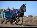 Відомий коняр із Харківщини хоче відродити давні традиції