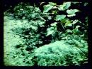 75 летие Дж Киекбаева Жәлил тирәктәре 1986 йыл Саитбаба
