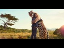 Шокирующая Дружба Людей и Диких Животных / Unbelievable Human-Animal Friendship