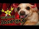 Sobachka / Бешеный Пёс by MEMEMETAL