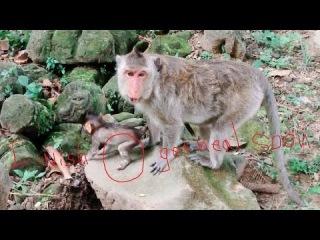 Life's Baby Monkey Broken Leg Episode 2 Hoppy Love To Jump