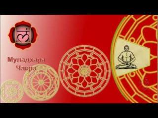 Кундалини йога для начинающих. Муладхара чакра