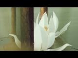 «Романс Тортилы» - Песня из фильма «Приключения Буратино»