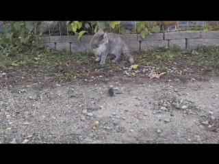 Васька!  Последний раз показываю, как надо  мышей ловить!