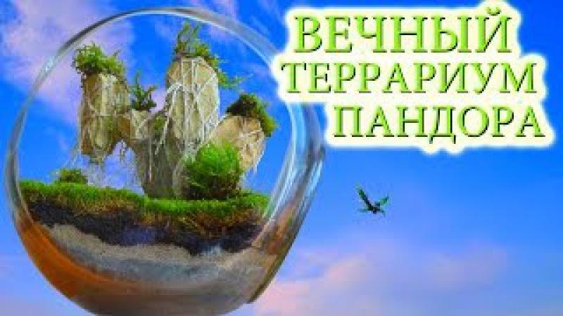 Большой вечный террариум в стиле фентези ПАНДОРА АВАТАР