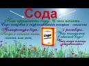 Сода как применять с чего начать Гасить или нет Пищевая или аптечная