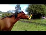 Лошадь с резиновой курицей