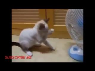 САМАЯ СМЕШНАЯ подборка приколов С КОШКАМИ - Смешные кошки