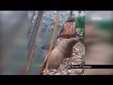 *;@$%! Российские рыбаки глубоко потрясены неожиданным уловом