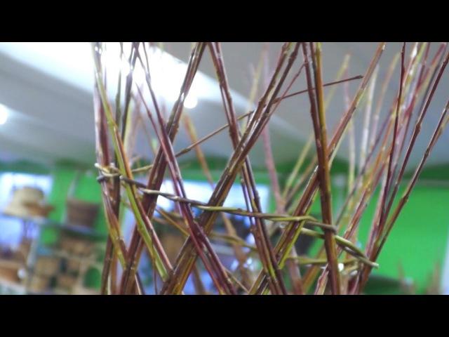 Плетение из ивы дерево своими руками