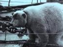 Неизвестная Война. Фильм 6. Война в Арктике